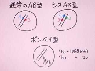 型 シス ab