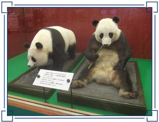 ~多摩動物公園~ ランラン(蘭蘭)&カンカン(康康)  上野動物園・初代パンダの『ランラン&カンカン』...
