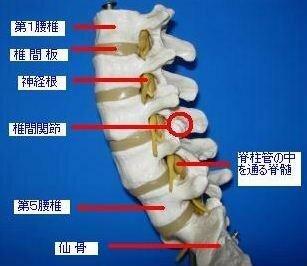 が の 痛い 肋骨 婦人 科 下 左