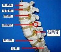 右 脇腹 筋肉 痛 の よう な 痛み