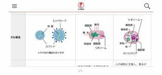 左:ウィルス 真ん中:細菌 右:真菌  着目点は、細胞膜、核、ミトコンドリア、染色体  あとは自分で考えてみてください。