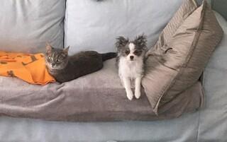 楽しみですね! 我が家も3ヶ月ぐらい前に猫(4歳♂)先住の所に子犬(4ヶ月♀)を迎えました。...
