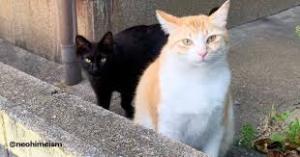 おはよう(^_-)-☆  猫様おはよう(^_-)-☆   キャット☆