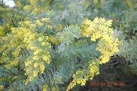 久しぶりです。いつも植物の名前をお尋ねしています。今回も、最近ご近所にあるこの花、気に入ったのですが、名前がわかりません。ぜひご教示ください。