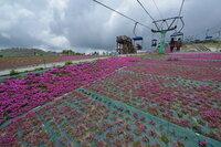 観光地の写真屋さんは肖像権無視していいの? 今日 愛知県茶臼山の芝桜を見学と撮影に行きました。生憎芝桜は終盤でほとんど落花状態でしたが、それでもカメラを持った人が結構居ました。 リフトで登ったのですが到着少し前に全ての乗客を「記念写真で~す」と言って撮影して到着時にプリントして売り込んでいました。 写真を撮られたくない人も居ると思いますがお構いなしで全リフト客を撮影していました。 買っ...