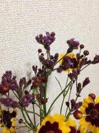 多摩川に咲いていた紫色の花の名前について質問です 今日多摩川を散歩していたら、背の高い紫色の花を付けた植物を見かけました。 叱られるかもしれませんが、綺麗だったので少し頂いたのですが、家に帰って調べても名前が分かりません。 どなたかお詳しい方に、この花の名前を教えていただきたいと思って質問させていただきました。  特徴は背が高い(1mを超えるくらい)植物で、先端に小さな紫の花を付けて...