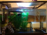 ミシシッピニオイガメの45cm水槽です。 こんな感じで良いでしょうか?