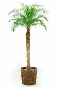 フェニックス・ロベレニー・ヤシの木を購入してリビングに置いてから、体がところどころチクチク痛痒いのですが、原因として虫などは考えられますか? 対策があれば教えていただきたく、よろしくお願いいたします。