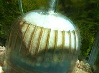 最近外掛けフィルターが壊れたので、投げ込みに変えたのですが、 画像のような白いウヨウヨしたものが出ました。 水槽壁面からも出てます。 新しいものを入れるとバクテリアの関係で、こういうのが出ると聞いたのですが これはそれに該当しますか?  40cm水槽でヤマトヌマエビ×1, サカサナマズ×2を飼っています。 水草は無し、大磯砂利がしていてあります。 水槽そのものは立ち上げてから2...