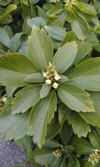白い花をつける植物です。 地面からたくさん生えているこの植物の名前をおしえて下さい。