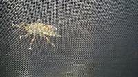 これ、何ていう虫ですか、、? 裏面の写真ですがわかりますかね??