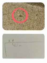 この虫わかる人いますか?(画像有り)  風呂の天井(砂壁)を歩いてるフワフワもふもふした白い小さな虫。  ・大きさは5mmぐらい。 (全体が2〜3mmぐらいの白い毛で覆われてる) ・針穴みたい な黒い目と2本だけ...