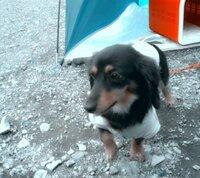 犬って、歯磨き粉が好きなんですか? なんか、歯磨きしてるとどんな時でも飛びついてくるんですけど…笑