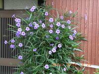 この植物(9月14日撮影。中部地方)の名前を教えて下さい。宜しくお願い致します。