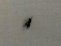 室内で大量に発生して困ってます。虫の名前と対処法を教えてください。