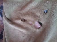 飼い猫が毛布を食べてしまいます。(>_<) 水曜日、何気なく部屋に戻ったら、見事に毛布が穴だらけになってました。 その時は、下に湯たんぽがあったので気持ちよくなって吸い付いてる間にたべちゃったのかな...