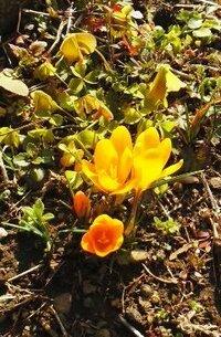 空き地に咲いている黄色い花の名前をおしえてください。