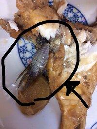 魚のスズキを煮付けましたら、写真の黒丸でかこった中にあるような虫?がでてきました‥  これは何でしょうか? また、害のある物でしょうか?  お分かりになる方がいらっしゃいましたら教 えて下さい。  宜しくお願いします。