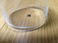 この蜘蛛の名前と特徴?を教えてください。 自宅に居たのですが、蜘蛛はダニを食べてくれるから殺さない方が良いなど聞きますが、この蜘蛛は有害だったりするのでしょうか?
