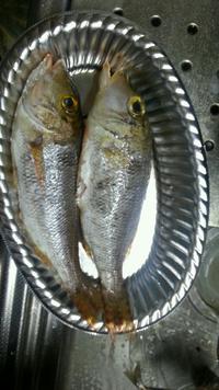 これは食べられる魚ですか?あと、食べられるなら美味しい食べ方をおしえてください!