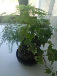 この植物(二種類)の名前はなんですか?育て方(水やり等)を教えてください!!
