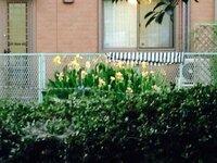 この奥の家の手前の黄色い花が咲く植物はなんという植物ですか? 毒はありますか? 買いたいと思っています。 奥の家は知り合いの人の家なので気にしないでください。