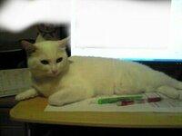 猫はどうしていつも同じ場所に居座るのですか?