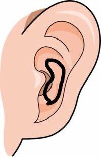 耳たぶ 押す と 痛い