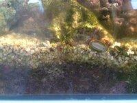 海水水槽での飼育について相談です。  60センチオーバーフローで、 クマノミ×2、デバスズメダイ×1 ヤドカリ×1 と掃除用の貝を数匹飼っています。  写真にあるように、 サンゴ底砂の下が 黒く ヘドロ状に...