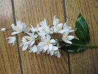 この白い花の名前はなんでしょうか? スーパーの駐車場わきに生えており、きれいだったので気になりました。 どなたか詳しい方、宜しくお願いします。