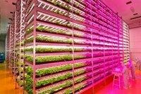 岡山県で無農薬野菜工場化で質問します。 岡山県は47都道府県で1年間の日照時間が1番多い事から「晴れの国」と言われているんですけど、  日照時間が1番長いんなら、太陽光発電設備をたくさん設置して太陽光の代わりにLED照明を使って無農薬野菜を栽培する野菜工場をたくさん建設すれば儲かると思うんです。  太陽光発電で発電した電力は蓄電池に貯めて、発電出来ない夜中とか雨天、曇りの日に貯めた電...