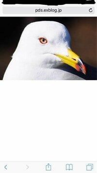 人間でも動物でも、黒目の周りに白目があると怖く見えるのは何でですか?