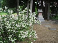 旧暦で四月を「卯月」と言います。しかし「卯」だけを月の名前にとりたてるのには違和感を感じます。これが桜であれば、私の薄学でも理解可能なのですが。。。  かつて卯は特別な花だったのでしょうか。。。