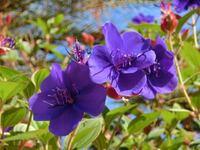 このお花なんでしょうか? ガーデンパークに咲いていました。