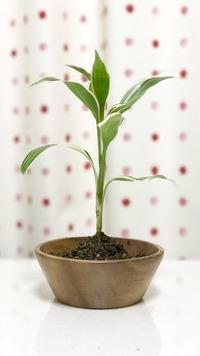 観葉植物の種類がわかりません(>_<) 教えてください。