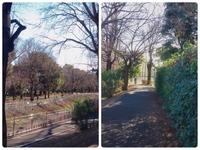 都内の公園だと思うのですか、写真の公園がどこかわかる方がいらっしゃいましたら教えていただきたいです。よろしくお願いします。