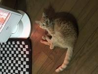 避妊手術後の猫の餌 セレクトバランス、ロイヤルカナン 避妊手術後の餌について相談させてください。 2週間ほど前に避妊手術が終わり、現在もセレクトバランスの子猫用を与えています。 特別肉付きが悪い訳ではないのですが体格が小さく2kgほどしかありません。 獣医さんに相談した所ロイヤルカナンの避妊手術後用のフードのお試しを勧められました。 今までずっとセレクトバランスを与えていて食いつきも...