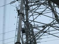 送電線の鉄塔に集団で集まる鳥は何鳥と言うのでしょうか?  夕方から、数百羽ずつの集団で飛来し、何十万?と集まります。  (うるさい、糞害)困っています。  相談-苦情先は市役所、警察、 東電どこが宜しいのでしょうか?  宜しくお願い致します。-------- 栃木県小山市です