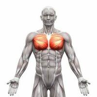 大胸筋下部の内側が左右に割れています。 ちょうどこの図大胸筋を上下逆さまにした感じです。 トレーニングで矯正することはできるでしょうか。