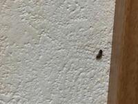 洗面所のところにいた虫です。 これはなんという虫ですか?