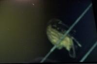 フクロウ?または他の鳥か? 夜、帰り道、木々の中から飛んできて 電線に止まりました。 写真がボケていて、はっきり写っていないのですが、 この状態で、フクロウか?または違うのか?が 分かる方いらっしゃ...