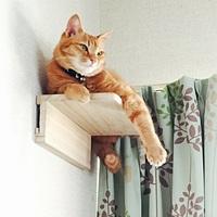 猫のステップ台、キャットウォークを壁に取り付けたいです  イメージは画像のような物です 階段の途中に猫が乗り降りできるように壁に取り付けたいと思っています猫は3.5kg程で、この子が踏み台にしても落ちな...