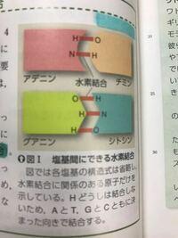 水素結合でなぜアデニンはHとN、チミンはOとH何でしょうほかのグアニンとシトシンも これはきまっていますか?