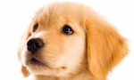 放し飼いにしている犬が人に迷惑をかけるときの飼い主の義務はなんでしょーかぁ? カァカァカァヽ(^△^)ノ