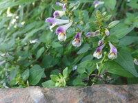 奥多摩で見つけた、この花の名前を教えてください。