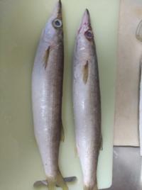 この魚の名前わかりますか?美味しい食べ方もよければ教えてください