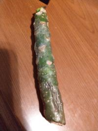 プルメリアの挿し木 ハワイで購入したプルメリアの挿し木が心配です。 購入した場所で、5センチくらいカットし、一晩水につけてから一週間ほどかわかして土へ埋めて。 と言われてその通りにしていましたが、どうも死にゆく雰囲気があります。  まだらに黒くなってきてしまいました。  ここから復活させてあげる方法はありますか?