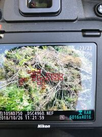 Nikon D750の写真確認について 撮った写真をカメラ本体で確認するとこのようなフォーカスエリアが写真に表示されてしまいます  表示枚数を下げたり 写真転送すればフォーカスエリアは消えるんですが気になってし...