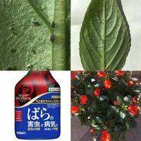 サンパチェンスについた害虫について ベランダ栽培しているサンパチェンスの葉に写真のような害虫がついてしまいました。 自宅にあった「住友化学園芸 ベニカXファインスプレー」を吹きかけておいたのですが、これで良いのでしょうか? まだ全体には広がっていないようで、目に付いた葉は取り除いたのですが心配です。 もしよろしれば、アドバイスいただけると幸いです。