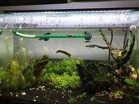 60センチ水槽 立ち上げ2ヶ月目ほどなんですが水槽の中身がしっくりきません。 この水槽にオススメの水草や石、流木の追加のアドバイスなどがあればお願いしたいです(T_T)
